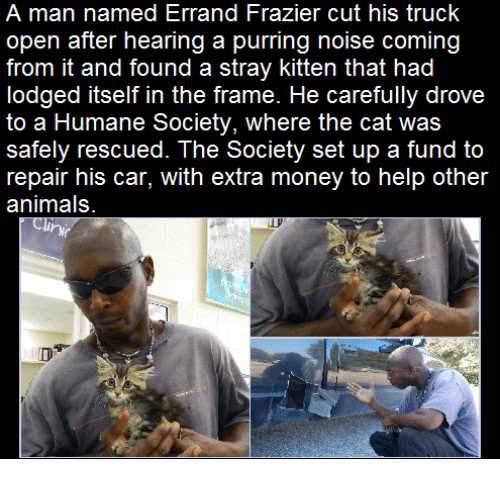 Memes, Humane Society, and Kittens: A man named Errand Frazier cut his truck  open after hearing a purring noise coming  from it and found a stray kitten that had  lodged itself in the frame. He carefully drove  to a Humane Society, where the cat was  safely rescued. The Society set up a fund to  repair his car, with extra money to help other  animals