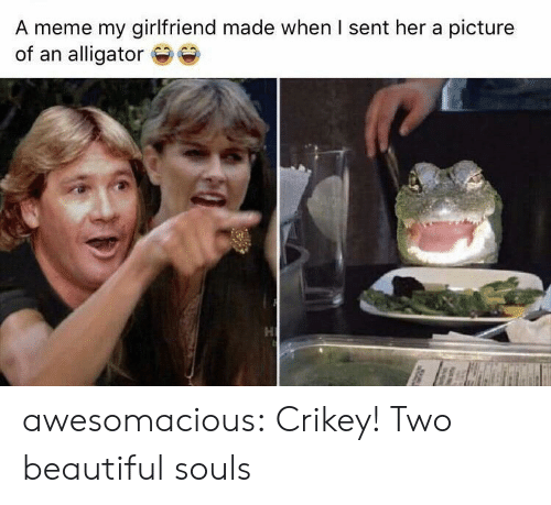 Souls: A meme my girlfriend made when I sent her a picture  of an alligator awesomacious:  Crikey! Two beautiful souls