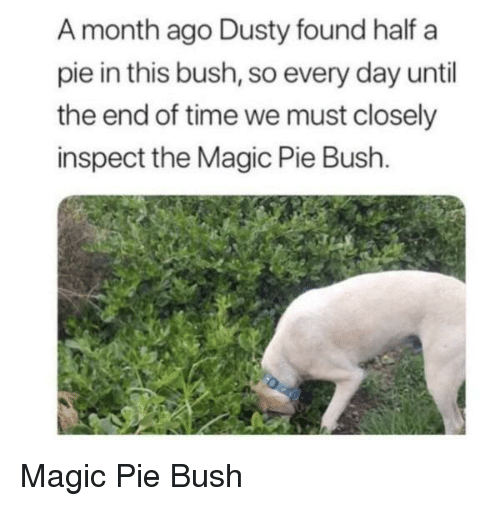 Day Until: A month ago Dusty found half a  pie in this bush, so every day until  the end of time we must closely  inspect the Magic Pie Bush. Magic Pie Bush