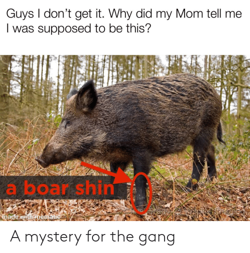 Mystery: A mystery for the gang