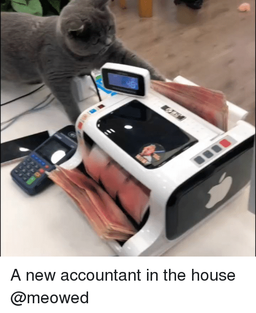 Accountant: A new accountant in the house @meowed