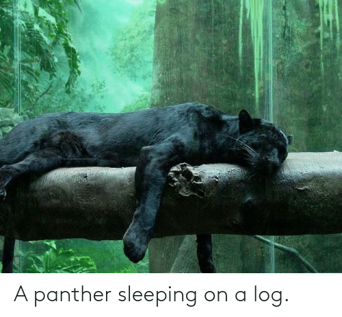 panther: A panther sleeping on a log.