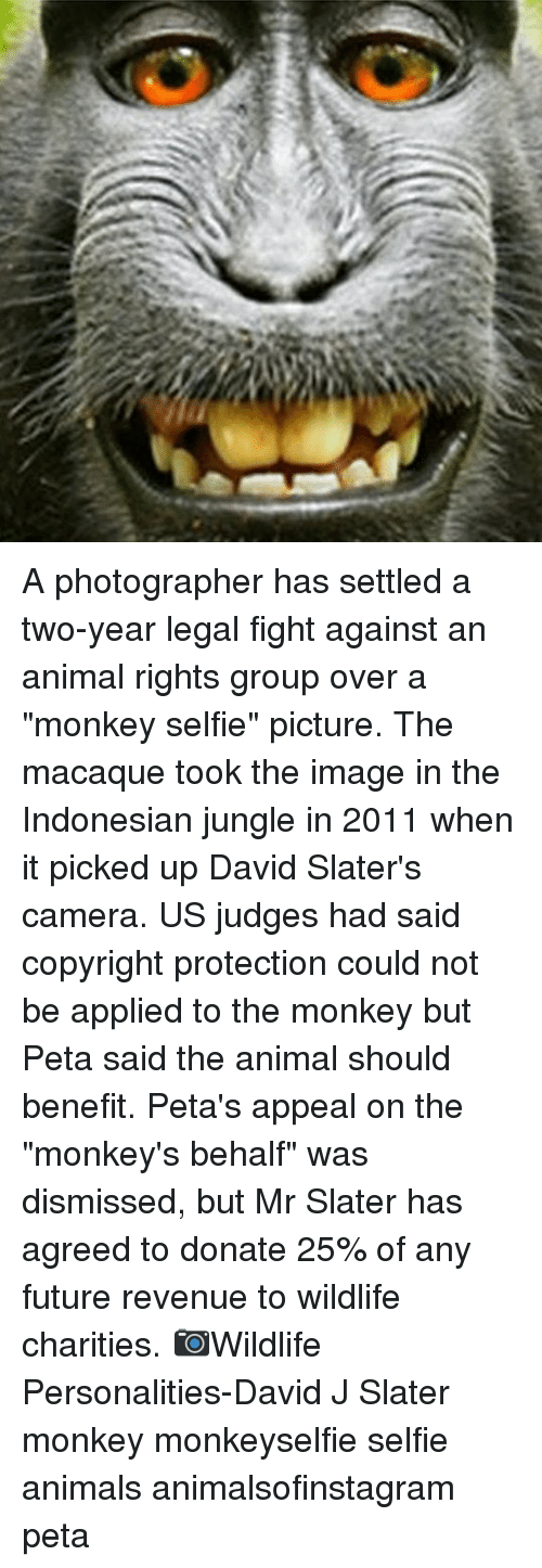 "fightings: A photographer has settled a two-year legal fight against an animal rights group over a ""monkey selfie"" picture. The macaque took the image in the Indonesian jungle in 2011 when it picked up David Slater's camera. US judges had said copyright protection could not be applied to the monkey but Peta said the animal should benefit. Peta's appeal on the ""monkey's behalf"" was dismissed, but Mr Slater has agreed to donate 25% of any future revenue to wildlife charities. 📷Wildlife Personalities-David J Slater monkey monkeyselfie selfie animals animalsofinstagram peta"