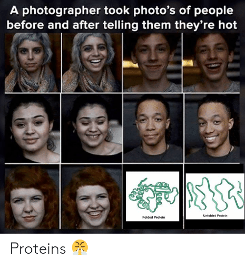 Memes, Protein, and 🤖: A photographer took photo's of people  before and after telling them they're hot  Unfolded Protein  Folded Protein Proteins 😤