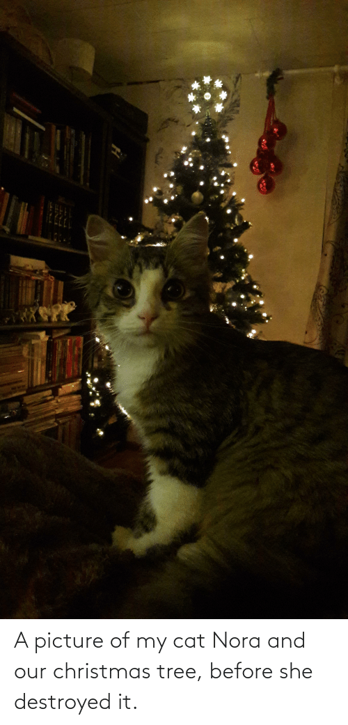 nora: A picture of my cat Nora and our christmas tree, before she destroyed it.