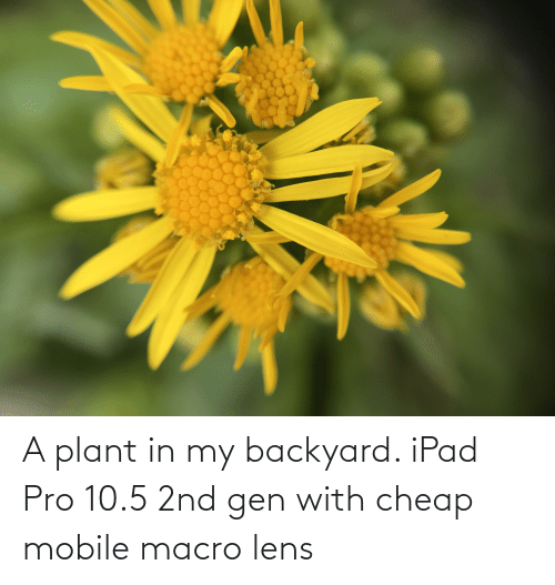 ipad: A plant in my backyard. iPad Pro 10.5 2nd gen with cheap mobile macro lens