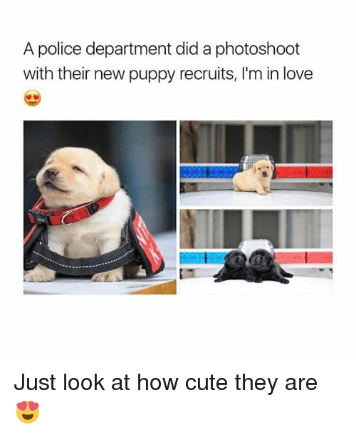 photoshootings: A police department did a photoshoot  with their new puppy recruits, I'm in love Just look at how cute they are 😍