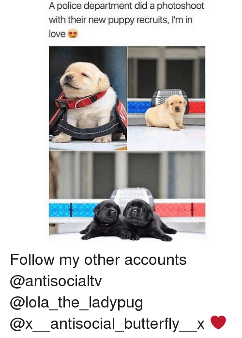 photoshootings: A police department did a photoshoot  with their new puppy recruits, I'm in  love Follow my other accounts @antisocialtv @lola_the_ladypug @x__antisocial_butterfly__x ❤️