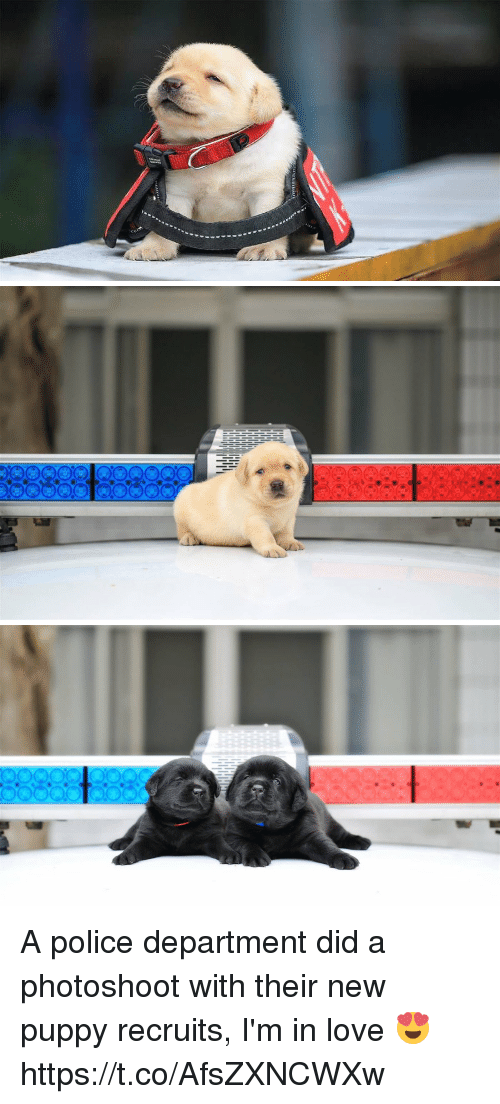 photoshootings: A police department did a photoshoot with their new puppy recruits, I'm in love 😍 https://t.co/AfsZXNCWXw