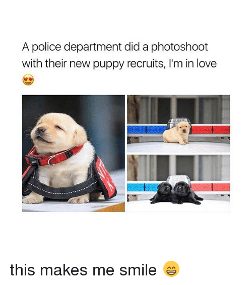 photoshootings: A police department did a photoshoot  with their new puppy recruits, I'm in love this makes me smile 😁