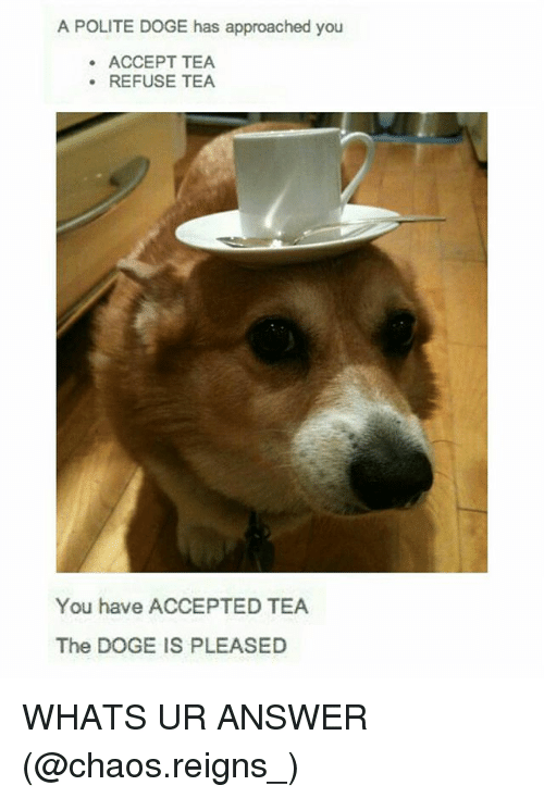 Doge, Memes, and Accepted: A POLITE DOGE has approached you  ACCEPT TEA  .REFUSE TEA  You have ACCEPTED TEA  The DOGE IS PLEASED WHATS UR ANSWER (@chaos.reigns_)