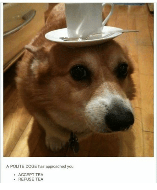 doges: A POLITE DOGE has approached you  ACCEPT TEA  REFUSE TEA