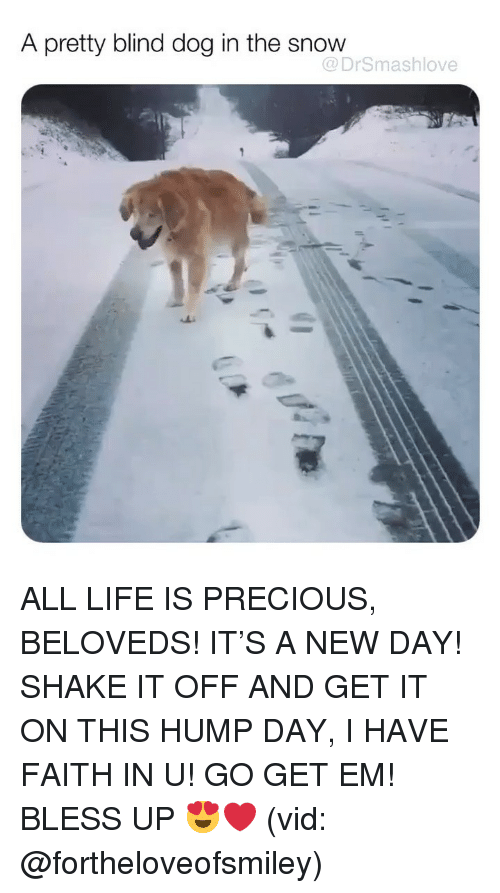 Hump Day: A pretty blind dog in the snow  @DrSmashlove ALL LIFE IS PRECIOUS, BELOVEDS! IT'S A NEW DAY! SHAKE IT OFF AND GET IT ON THIS HUMP DAY, I HAVE FAITH IN U! GO GET EM! BLESS UP 😍❤️ (vid: @fortheloveofsmiley)