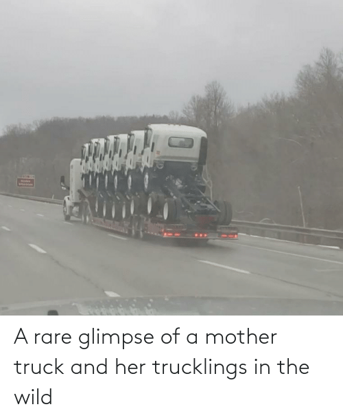 The Wild: A rare glimpse of a mother truck and her trucklings in the wild