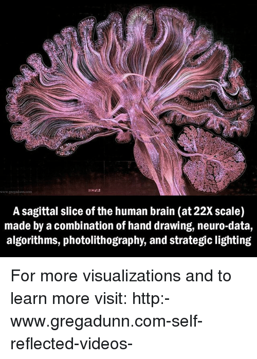 neuro: A sagittal slice of the human brain (at 22Xscale)  made by a combination of hand drawing, neuro-data,  algorithms, photolithography, and strategic lighting For more visualizations and to learn more visit: http:-www.gregadunn.com-self-reflected-videos-