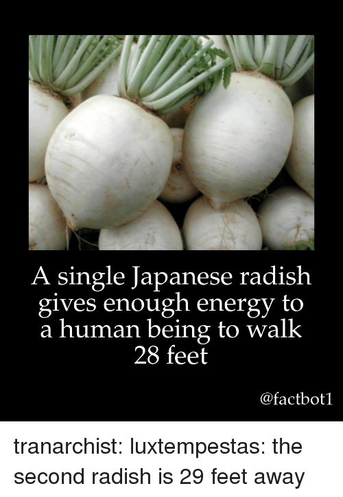 Energy, Target, and Tumblr: A single Japanese radish  gives enough energy to  a human being to walk  28 feet  @factbot1 tranarchist:  luxtempestas: the second radish is 29 feet away