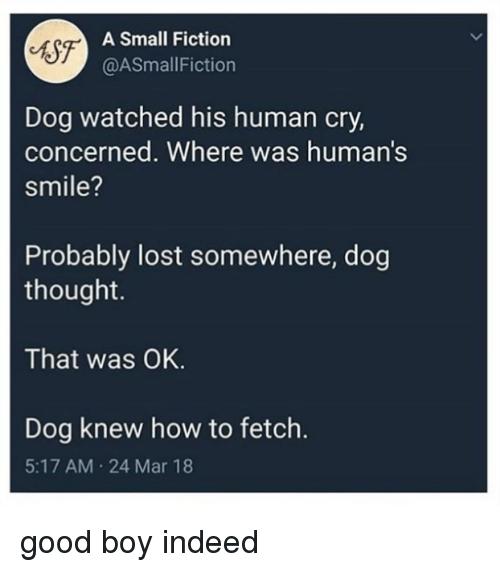 fetch: A Small Fiction  @ASmallFiction  Dog watched his human cry,  concerned. Where was human's  smile?  Probably lost somewhere, dog  thought.  That was OK.  Dog knew how to fetch.  5:17 AM 24 Mar 18 good boy indeed