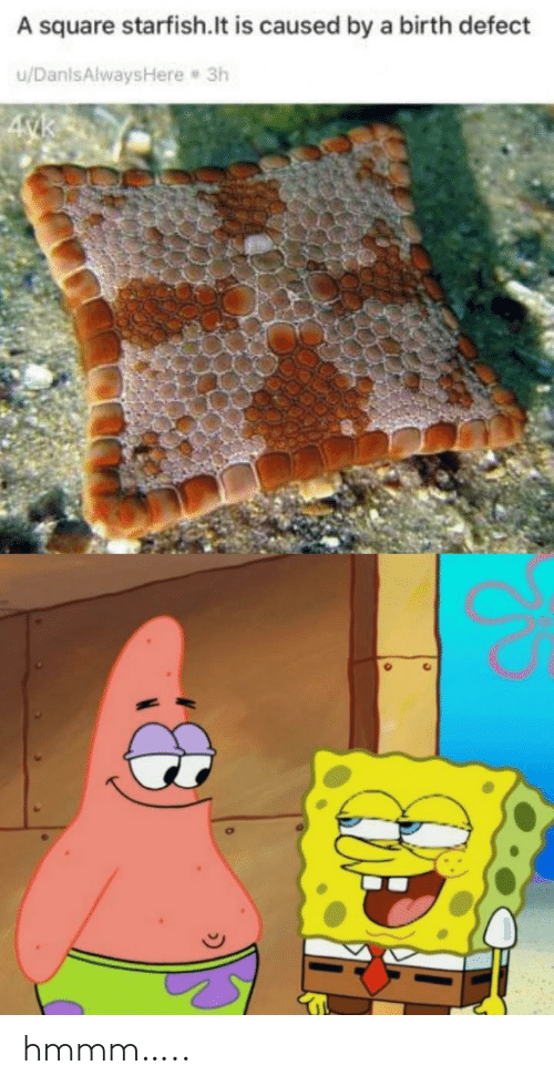 hmmm: A square starfish.lt is caused by a birth defect  u/DanlsAlwaysHere 3h  4yk hmmm…..