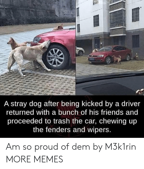 Dank, Friends, and Memes: A stray dog after being kicked by a driver  returned with a bunch of his friends and  proceeded to trash the car, chewing up  the fenders and wipers. Am so proud of dem by M3k1rin MORE MEMES