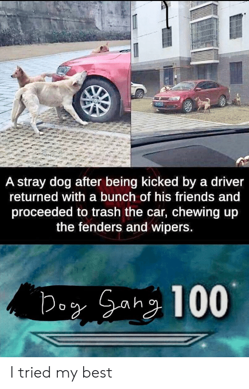 Friends, Trash, and Best: A stray dog after being kicked by a driver  returned with a bunch of his friends and  proceeded to trash the car, chewing up  the fenders and wipers I tried my best