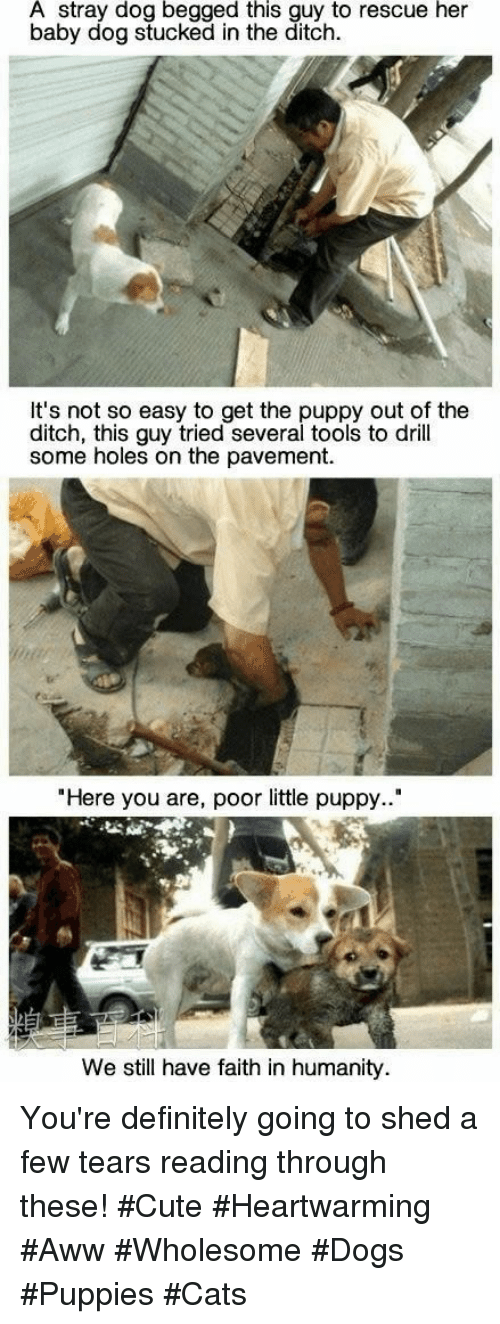"""Faith In Humanity: A stray dog begged this guy to rescue her  baby dog stucked in the ditch.  It's not so easy to get the puppy out of the  ditch, this guy tried several tools to drill  some holes on the pavement.  """"Here you are, poor little puppy..""""  We still have faith in humanity You're definitely going to shed a few tears reading through these! #Cute #Heartwarming #Aww #Wholesome #Dogs #Puppies #Cats"""