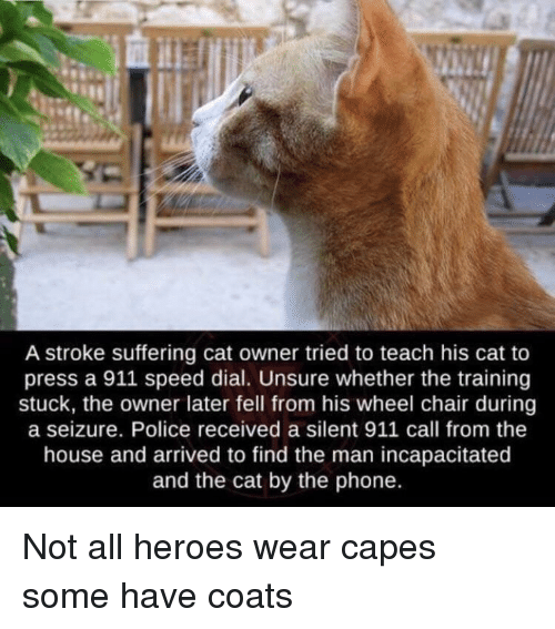Dial: A stroke suffering cat owner tried to teach his cat to  press a 911 speed dial. Unsure whether the training  stuck, the owner later fell from his wheel chair during  a seizure. Police received a silent 911 call from the  house and arrived to find the man incapacitated  and the cat by the phone. Not all heroes wear capes some have coats