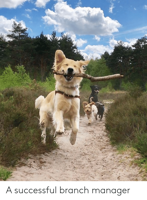 Dank, 🤖, and Manager: A successful branch manager