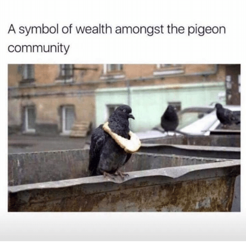 Community, Dank, and 🤖: A symbol of wealth amongst the pigeon  community