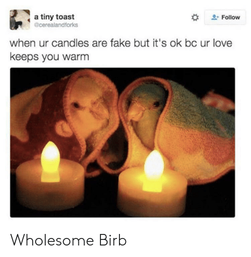 Wholesome: a tiny toast  @cerealandforks  Follow  when ur candles are fake but it's ok bc ur love  keeps you warm Wholesome Birb