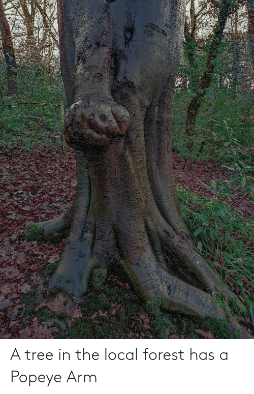 Popeye: A tree in the local forest has a Popeye Arm