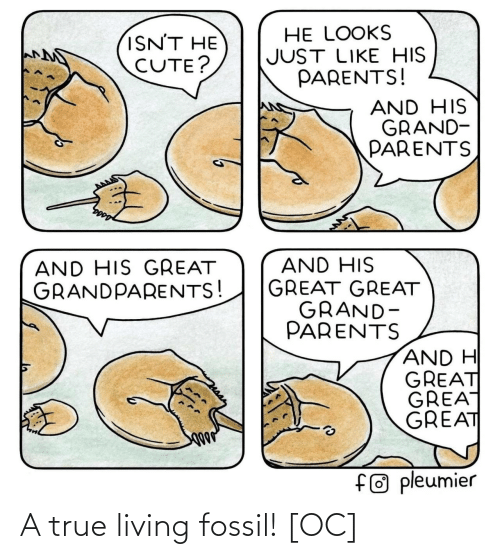 Fossil: A true living fossil! [OC]