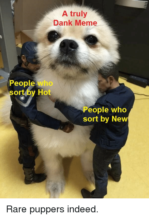 Dank, Meme, and Indeed: A truly  Dank Meme  People who  sort by Hot  eople who  sort by New Rare puppers indeed.