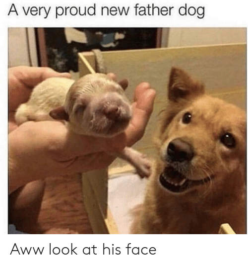 aww: A very proud new father dog Aww look at his face