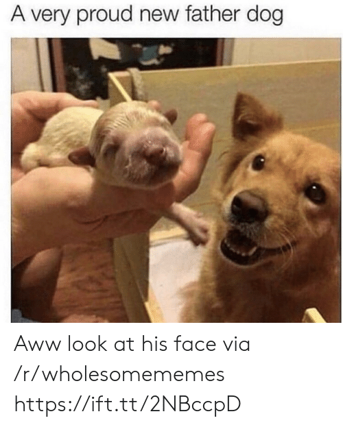 aww: A very proud new father dog Aww look at his face via /r/wholesomememes https://ift.tt/2NBccpD