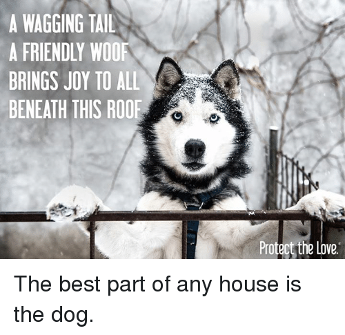 Dogs, Memes, and Joyful: A WAGGING TAIL  A FRIENDLY WOOF  BRINGS JOY TO ALL  BENEATH THIS ROOF  Protect the Love The best part of any house is the dog.
