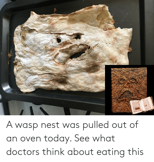 Nest: A wasp nest was pulled out of an oven today. See what doctors think about eating this