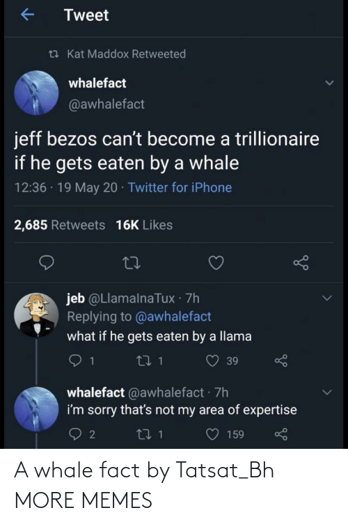 fact: A whale fact by Tatsat_Bh MORE MEMES