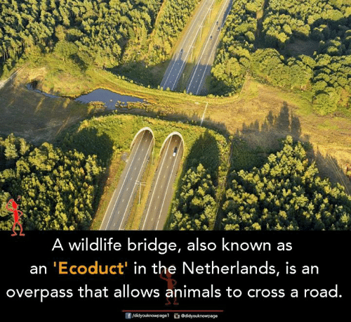 Animals, Memes, and Cross: A wildlife bridge, also known as  an 'Ecoduct' in the Netherlands, is an  overpass that allows animals to cross a road
