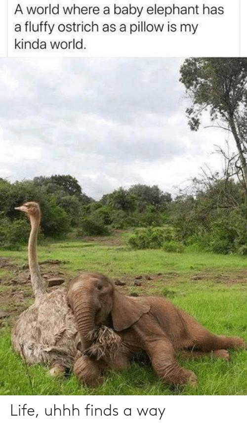 Uhhh: A world where a baby elephant has  a fluffy ostrich as a pillow is my  kinda world. Life, uhhh finds a way