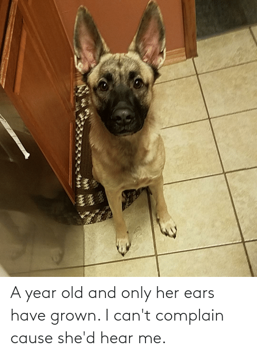 ears: A year old and only her ears have grown. I can't complain cause she'd hear me.