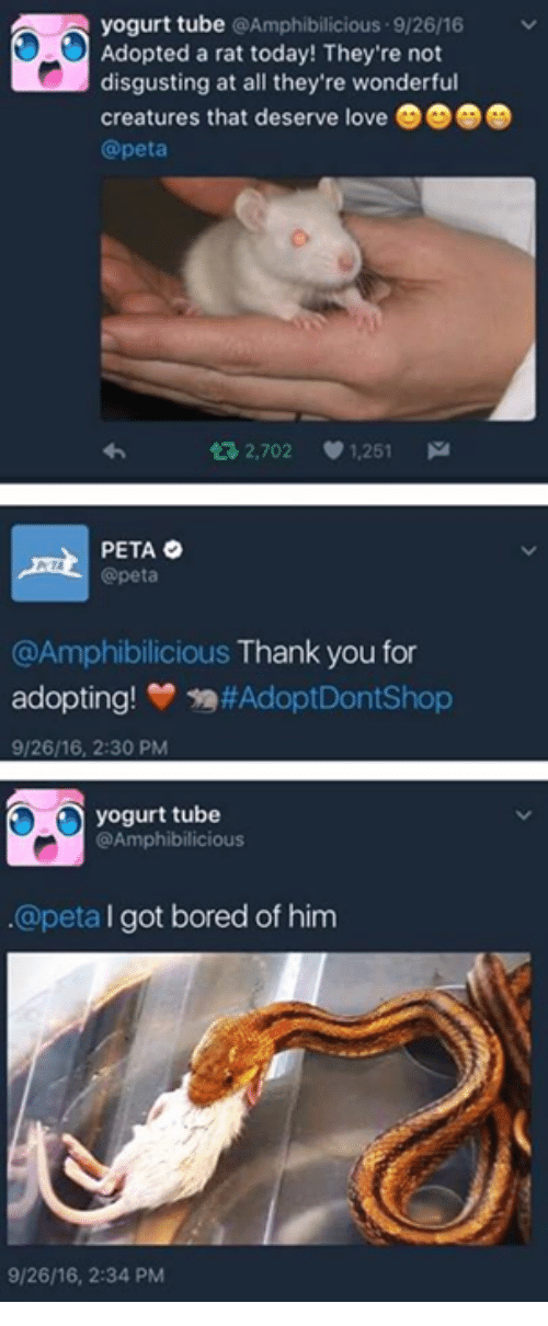 Bored, Peta, and Tube: A yogurt tube Amphibilicious 9/26/16  v  Adopted a rat today! They're not  disgusting at all they're wonderful  creatures that deserve love  @peta  ta 2,702  V 1.251  M  PETA  @peta  @Amphibilicious Thank you for  adopting!  #Adopt Dont Shop  9/2616, 2:30 PM  yogurt tube  @Amphibilicious  @peta l  got bored of him  9/26/16, 2:34 PM
