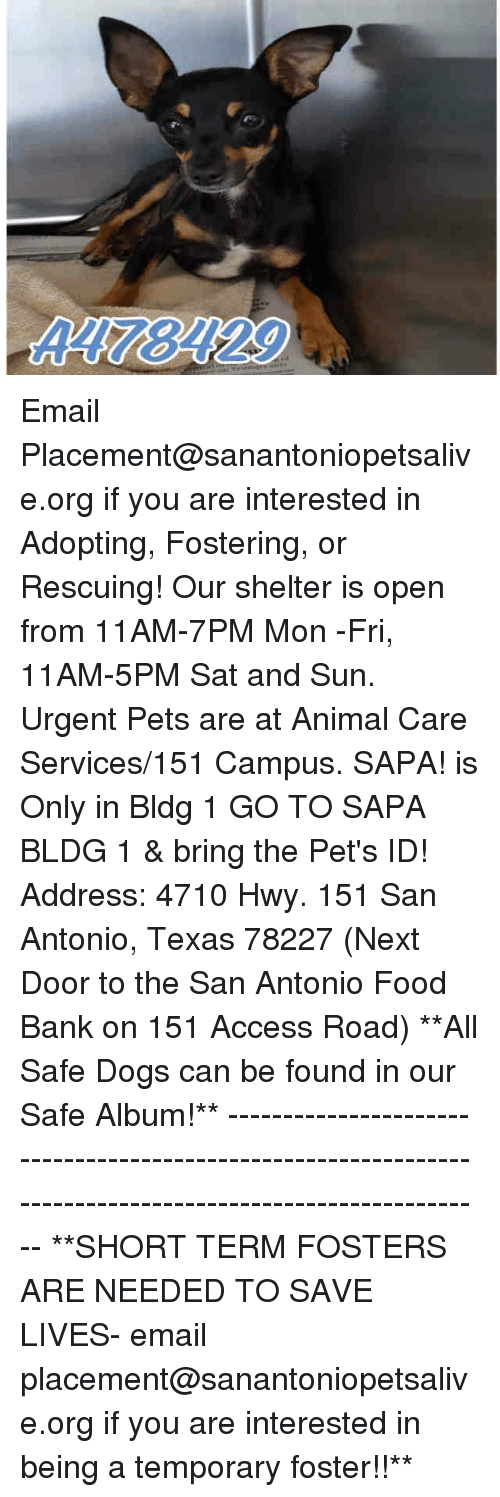 food bank: A178129 Email Placement@sanantoniopetsalive.org if you are interested in Adopting, Fostering, or Rescuing!  Our shelter is open from 11AM-7PM Mon -Fri, 11AM-5PM Sat and Sun.  Urgent Pets are at Animal Care Services/151 Campus. SAPA! is Only in Bldg 1 GO TO SAPA BLDG 1 & bring the Pet's ID! Address: 4710 Hwy. 151 San Antonio, Texas 78227 (Next Door to the San Antonio Food Bank on 151 Access Road)  **All Safe Dogs can be found in our Safe Album!** ---------------------------------------------------------------------------------------------------------- **SHORT TERM FOSTERS ARE NEEDED TO SAVE LIVES- email placement@sanantoniopetsalive.org if you are interested in being a temporary foster!!**