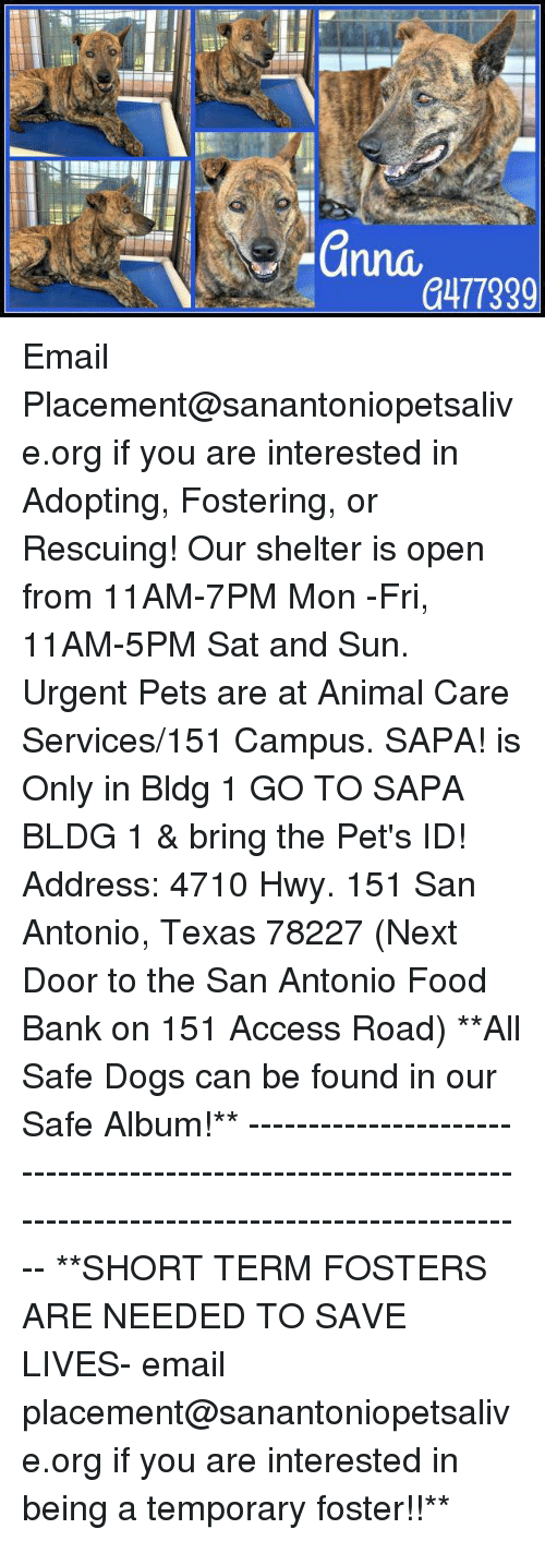 food bank: a477339 Email Placement@sanantoniopetsalive.org if you are interested in Adopting, Fostering, or Rescuing!  Our shelter is open from 11AM-7PM Mon -Fri, 11AM-5PM Sat and Sun.  Urgent Pets are at Animal Care Services/151 Campus. SAPA! is Only in Bldg 1 GO TO SAPA BLDG 1 & bring the Pet's ID! Address: 4710 Hwy. 151 San Antonio, Texas 78227 (Next Door to the San Antonio Food Bank on 151 Access Road)  **All Safe Dogs can be found in our Safe Album!** ---------------------------------------------------------------------------------------------------------- **SHORT TERM FOSTERS ARE NEEDED TO SAVE LIVES- email placement@sanantoniopetsalive.org if you are interested in being a temporary foster!!**