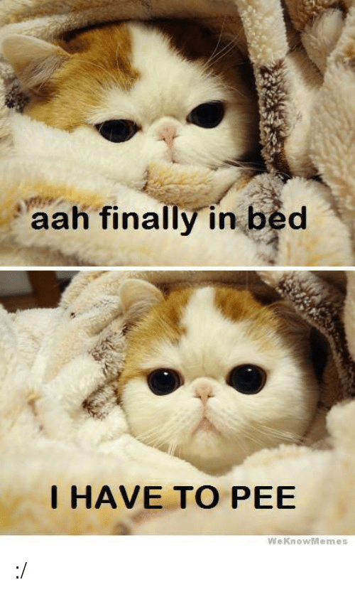 We Know Meme: aah finally in bed  I HAVE TO PEE  We Know Memes :/