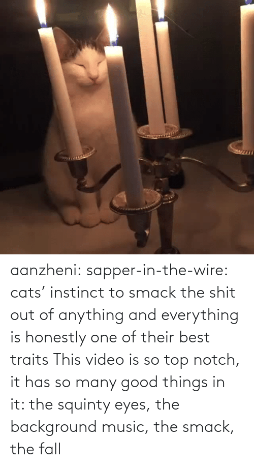 Honestly: aanzheni:  sapper-in-the-wire: cats' instinct to smack the shit out of anything and everything is honestly one of their best traits  This video is so top notch, it has so many good things in it: the squinty eyes, the background music, the smack, the fall