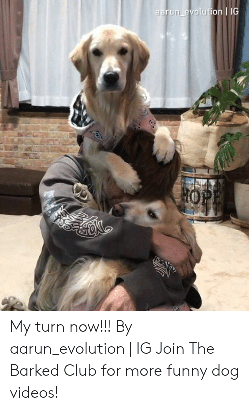 Club, Dank, and Funny: aarun evolution IG My turn now!!! By aarun_evolution   IG  Join The Barked Club for more funny dog videos!