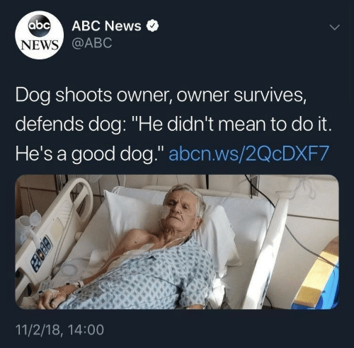 "Abc News: abc  ABC News  NEWS @ABC  Dog shoots owner, owner survives,  defends dog: ""He didn't mean to do it.  He's a good dog."" abcn.ws/2QCDXF7  11/2/18, 14:00  BEcez"
