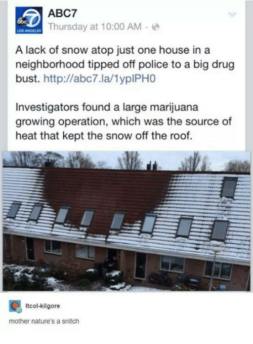 Motheres: ABC7  Thursday at 10:00 AM  A lack of snow atop just one house in a  neighborhood tipped off police to a big drug  bust  http://abc7.la/1yplPHO  Investigators found a large marijuana  growing operation, which was the source of  heat that kept the snow off the roof.  Itcol-kilgore  mother nature's a snitch