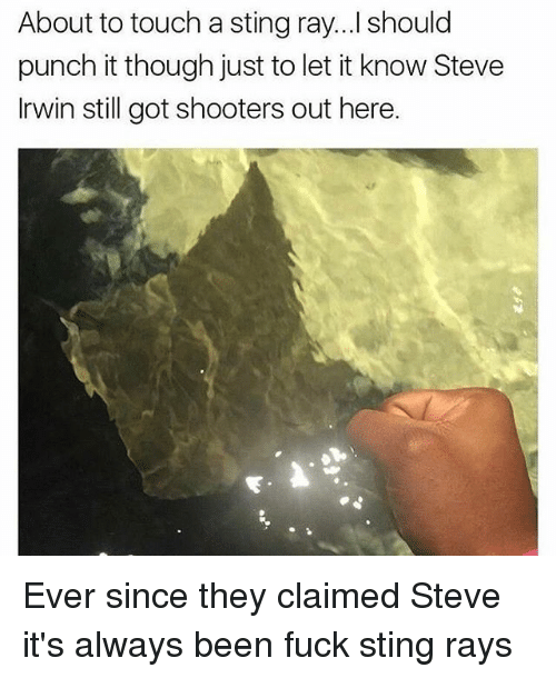 Stingly: About to touch a sting ray...I should  punch it though just to let it know Steve  Irwin still got shooters out here. Ever since they claimed Steve it's always been fuck sting rays