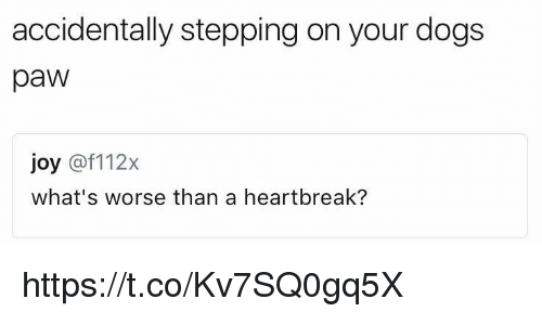 Pawing: accidentally stepping on your dogs  paw  joy @f112x  what's worse than a heartbreak? https://t.co/Kv7SQ0gq5X